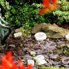 Sensory Garden7